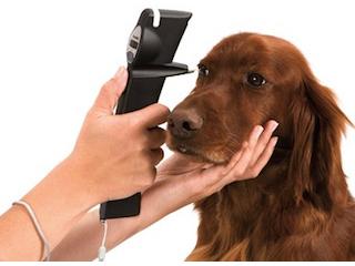 トノベット手持眼圧計