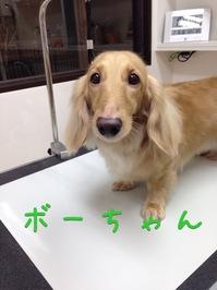 IMG_8645.JPGのサムネール画像